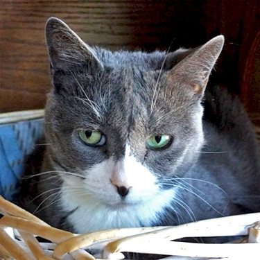 photo of Mary Tornabene's cat
